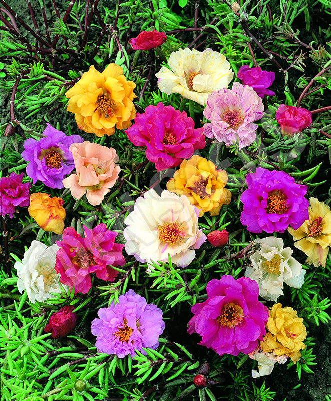 garden eden planters with Product Info Seeds on Best Cactus To Plant In Garden 4059807 in addition 205311303 besides Index further Guest Post Driving Off With Recycled Tires as well Product Info Seeds.