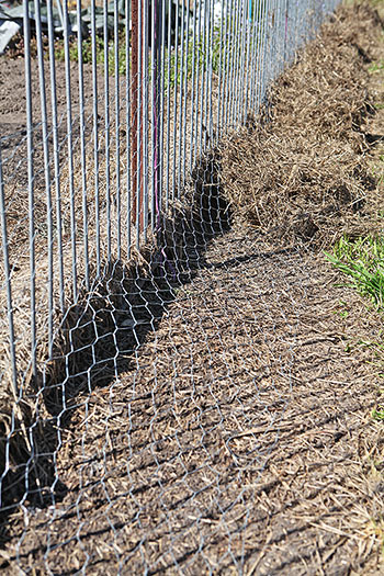 Bandicoot exclusion fence