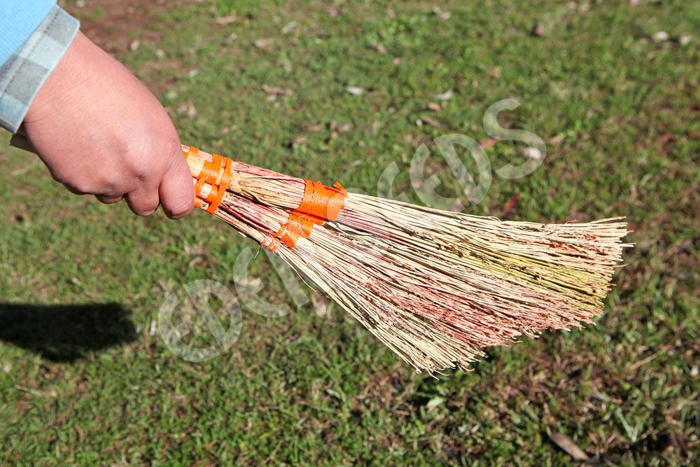 Sorghum - Broom Corn Ornamental | Eden Seeds