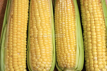 yellow corn jolly rodger sweet